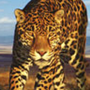 Avatar Leopardin