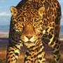 Avatar Leopardin