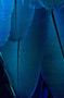 Avatar Maron Duree